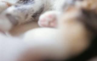 Лечение кошек международная