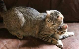 Уход и кормление котов