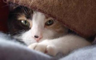 Чем лечить больного кота
