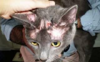 Кошка после болезни
