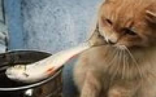 Советы ветеринаров по лечению аскаридоза у кошек