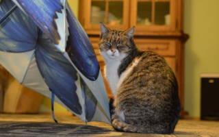 Лечение гастрита у кота