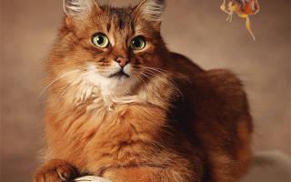 Как лечить кошку от блох
