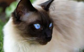 Вирус иммунодефицита кошек лечение