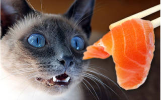 Сухой корм болезни кошек