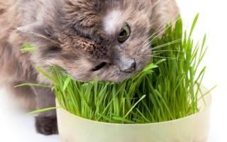 Лечение котов травами
