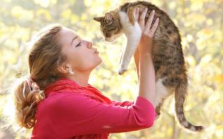 У кота воспалены десны как лечить