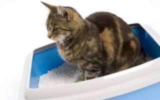 Кот не может пописать лечение