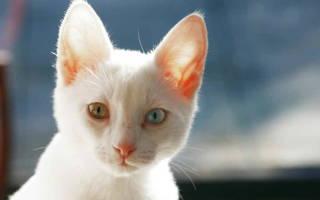 Энтерит у кота лечение