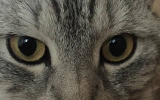 Гайморит у кота как лечить