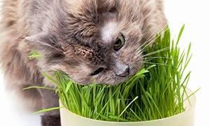 Как лечить авитаминоз у кошек