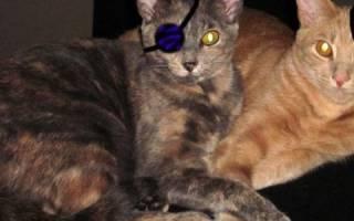 Энуклеация глазного яблока у кота история болезни