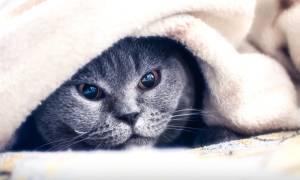 У кошки болит горло чем лечить